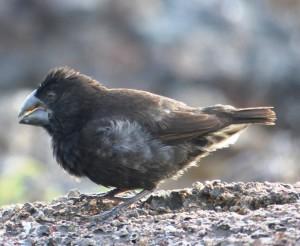 Finch 3